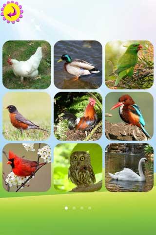 تطبيق Birds Book