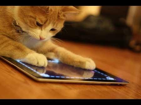 قطط تلعب بالايباد