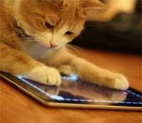 فيديو: حيوانات ذكية تستمتع باللعب بجهاز الآيباد