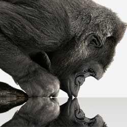 Photo of فيديو: زجاج Gorilla Glass 4 القوي يحمي أجهزة سامسونج