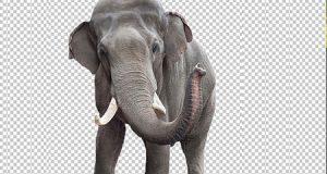 تطبيق KnockOut 2 Pro لقص الصور وحذف خلفيتها بسهولة واحترافية