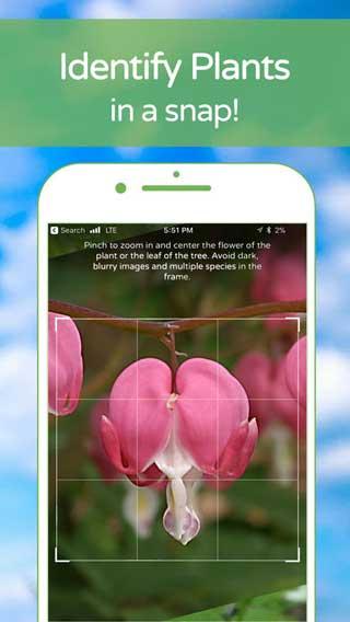 تطبيق PlantSnap للتعرف على أسماء وأنواع النباتات فقط بالكاميرا !