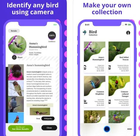 تطبيق Bird Identification للتعرف على الطيور