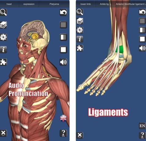 تطبيق 3D Anatomy - تشريح الجسم البشري